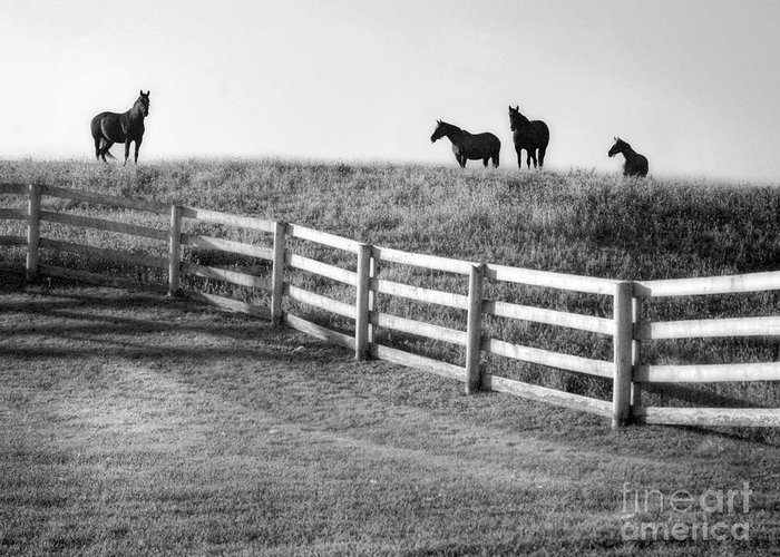 Horses Greeting Card featuring the photograph On The Ridge by Claudia Kuhn