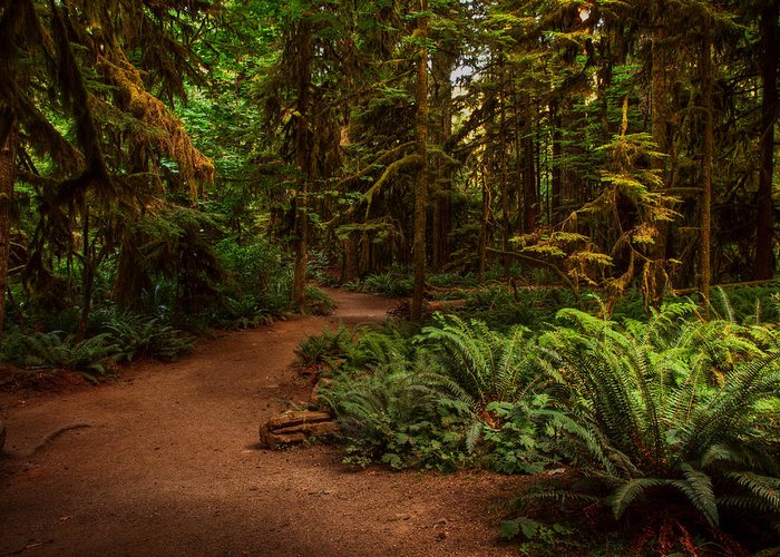 Forest Greeting Card featuring the photograph On The Trail To .... by Randy Hall