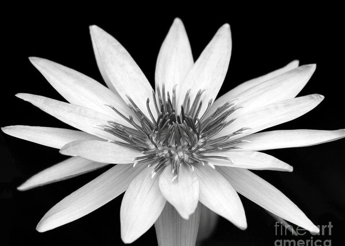 Water Lily Greeting Card featuring the photograph One Black And White Water Lily by Sabrina L Ryan