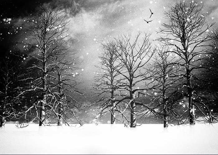 Winter Greeting Card featuring the photograph One Night In November by Bob Orsillo