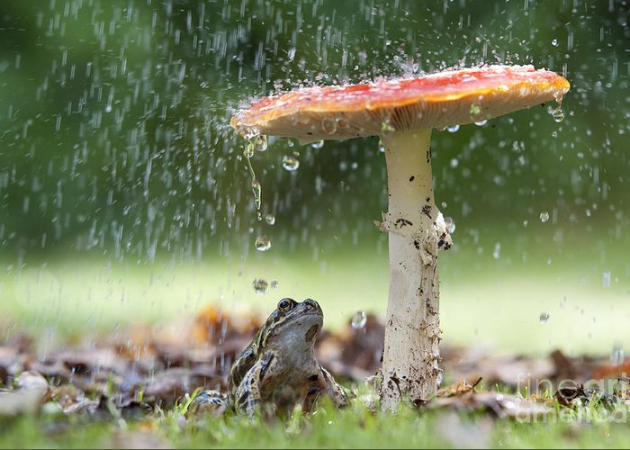 Frog Greeting Card featuring the photograph One Rainy Day by Tim Gainey