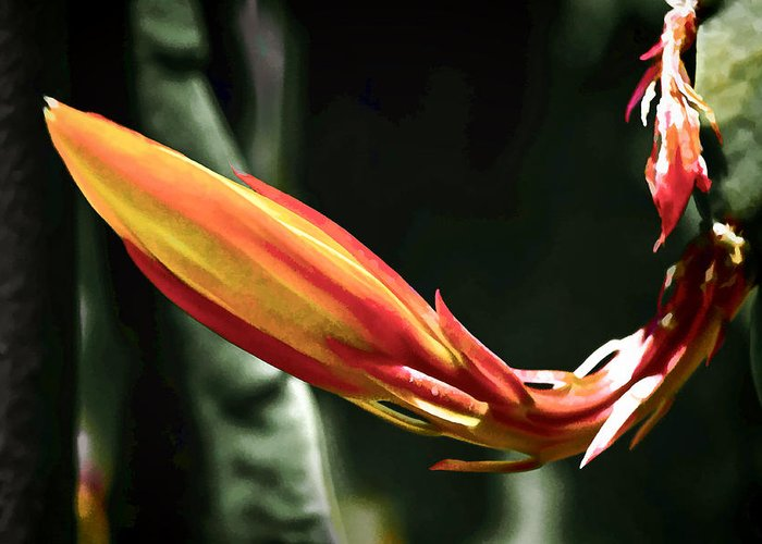 Epiphyllum Greeting Card featuring the digital art Opening Soon by Photographic Art by Russel Ray Photos