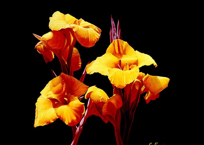 Yellow Cannas Greeting Card featuring the painting Orange Cannas by Gary Hernandez