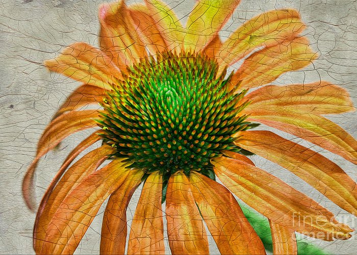 Flower Greeting Card featuring the photograph Orange Crackle by Deborah Benoit