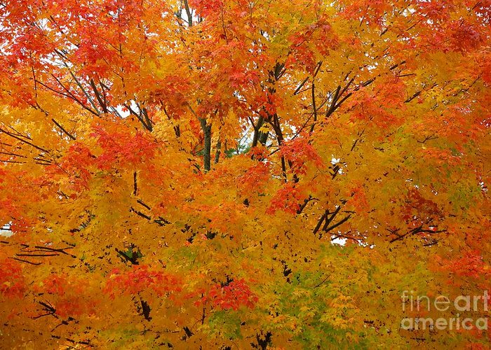 Fall Greeting Card featuring the photograph Orange Crush by Robert Pearson