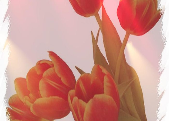 Tulips Greeting Card featuring the photograph Orange Light by Debra Miller