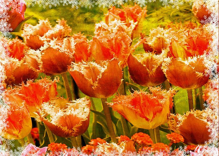Tulips Greeting Card featuring the photograph Orange Princess Fringed Tulips by Debra Miller