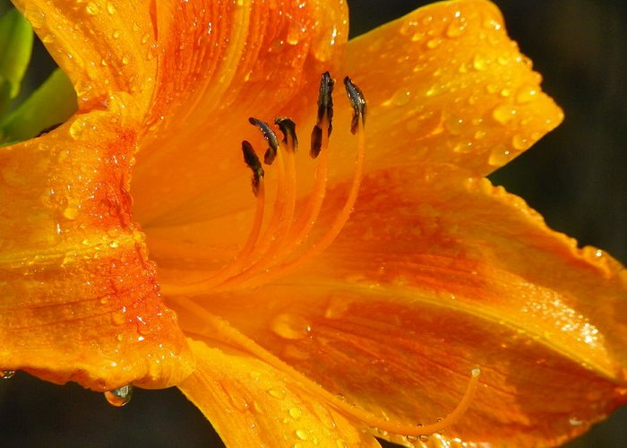 Orange Greeting Card featuring the photograph Orange Rain by Karen Wiles