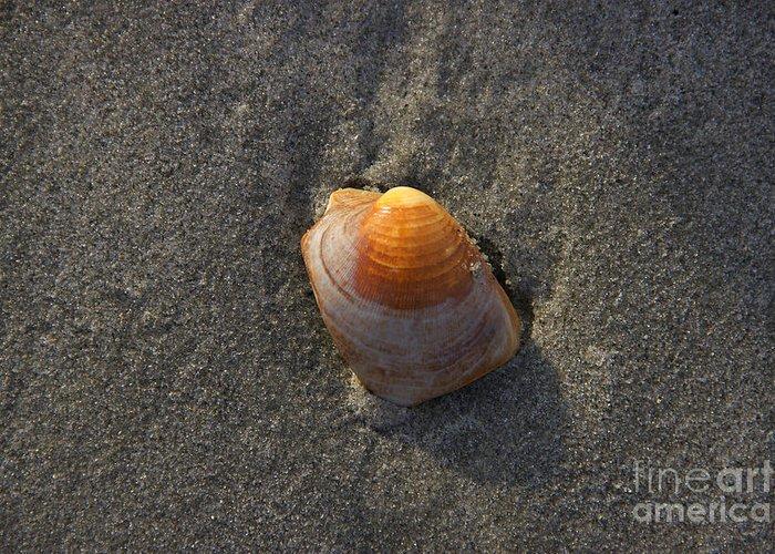 Seashells Greeting Card featuring the photograph Orange Seashell by Michael Mooney