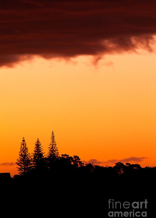 Araucaria Greeting Card featuring the photograph Orange Sunset And Silhouettes Of Norfolk Pines by Stephan Pietzko