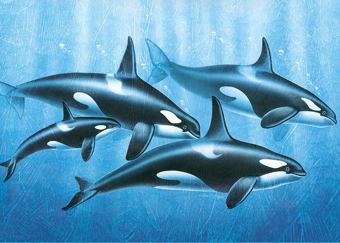 Jon Q Wright Greeting Card featuring the painting Orca Group by JQ Licensing