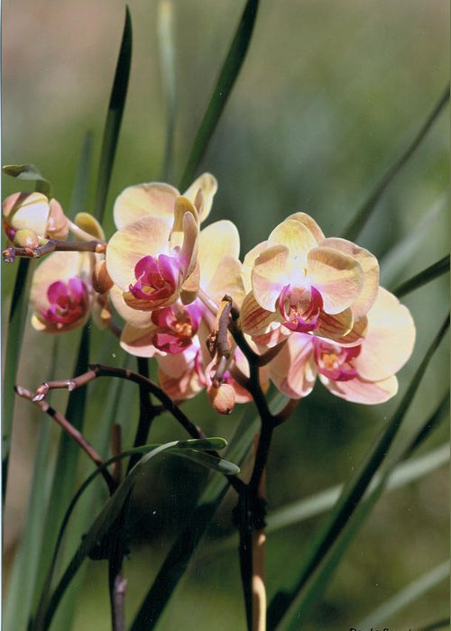 Orchid Greeting Card featuring the photograph Orchid Dream by Paula Rountree Bischoff