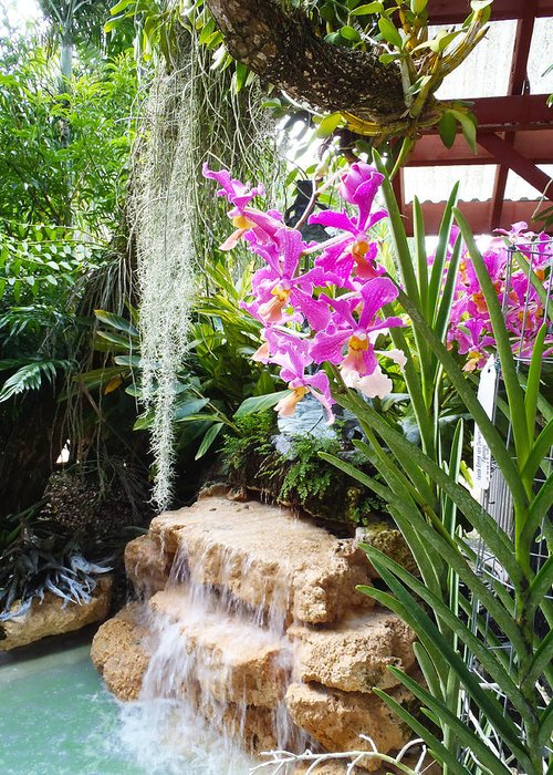 Orchids Greeting Card featuring the photograph Orchid Garden by Carey Chen