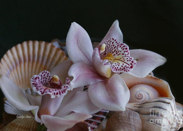Orchid Pink Shells Tropical Paradise Beach Flowers Framed Matted Canvas Prints Greeting Card featuring the photograph Orchid Garnish by Carolyn Staut