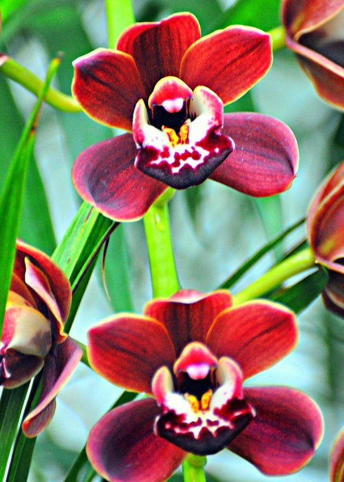 Orchid Greeting Card featuring the photograph Orchid Rusty by Marty Koch