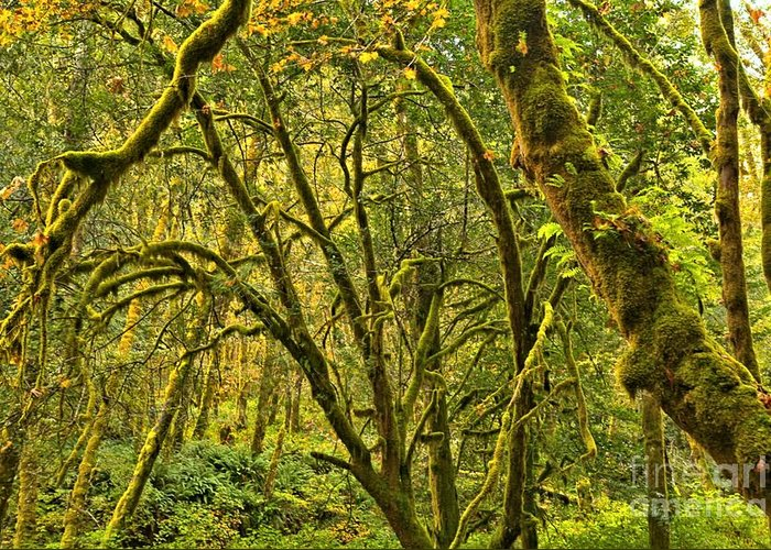 Oregon Rainforest Greeting Card featuring the photograph Oregon Rainforest by Adam Jewell