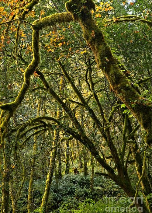 Oregon Rainforest Greeting Card featuring the photograph Oregon Rainforest Green by Adam Jewell