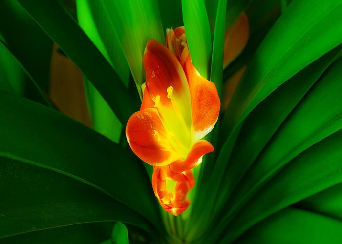 Flower Greeting Card featuring the photograph Organic Glowing by Daniel Daniel