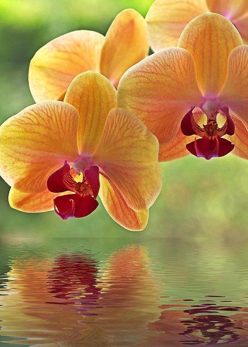 Phalaenopsis Greeting Cards