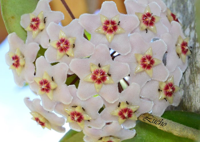 Flora Greeting Card featuring the photograph Orquidea by Luis fdo Serna agudelo
