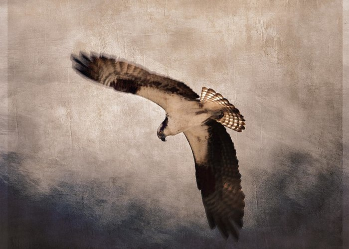 Osprey Greeting Card featuring the photograph Osprey Over The Columbia River by Carol Leigh
