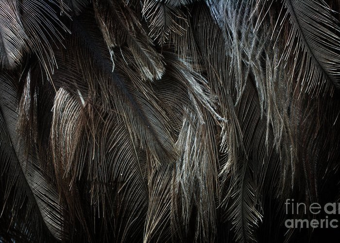 Feather Texture Greeting Card featuring the photograph Ostrich Feather Texture by Jolanta Meskauskiene