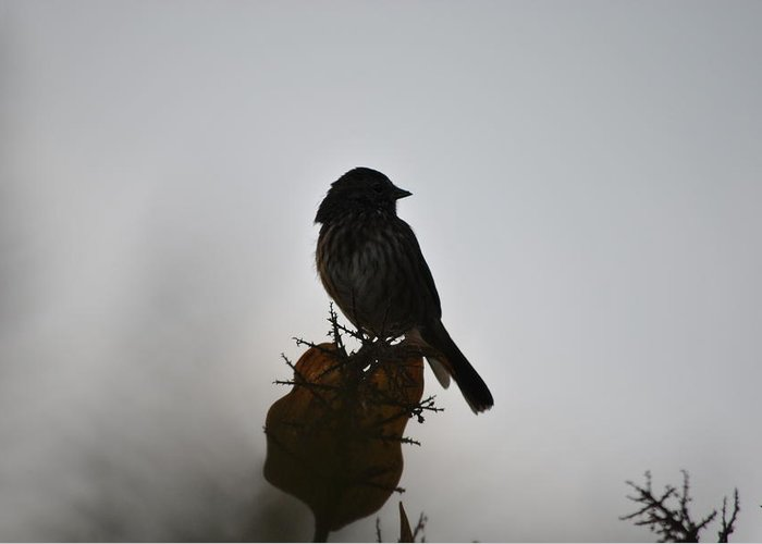 Bird Greeting Card featuring the photograph Out Of The Fog by Paulina Roybal