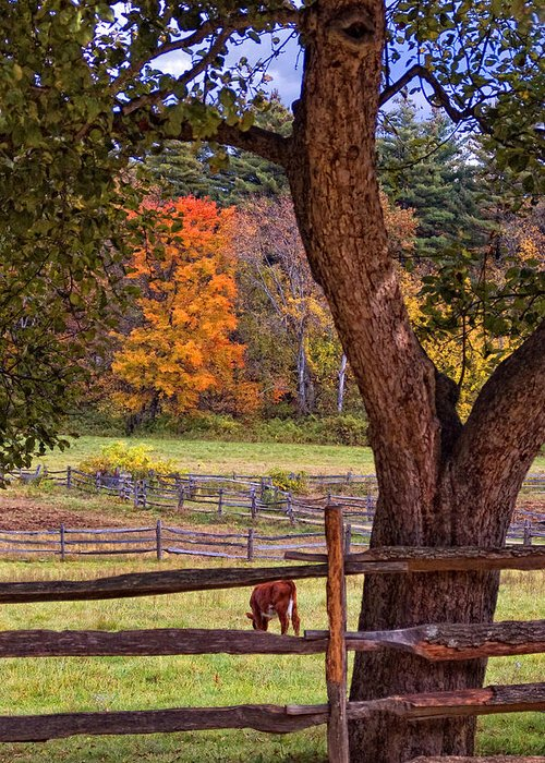 Autumn Greeting Card featuring the photograph Out To Pasture by Joann Vitali
