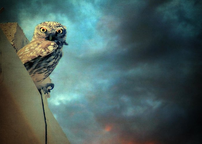 Owl Greeting Card featuring the photograph Owl by Taylan Apukovska