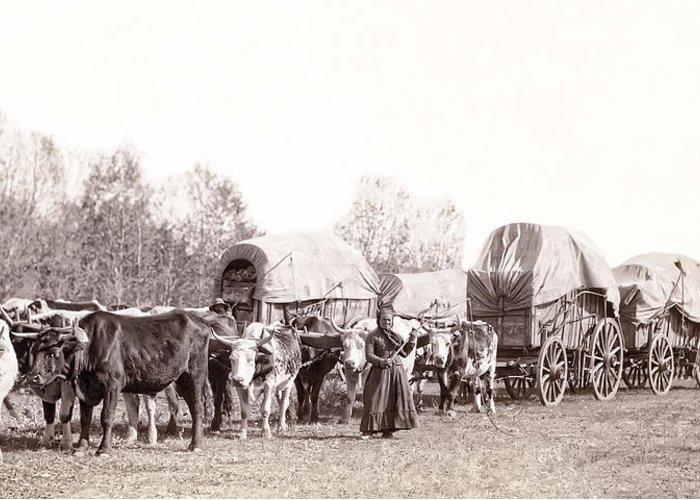 south Dakota Greeting Card featuring the photograph Ox-driven Wagon Freight Train C. 1887 by Daniel Hagerman