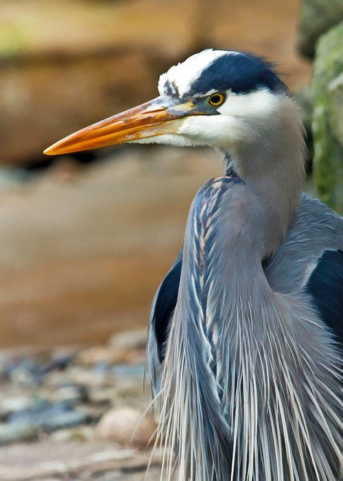 Blue Heron Greeting Card featuring the photograph Painted Blue Heron by Athena Mckinzie
