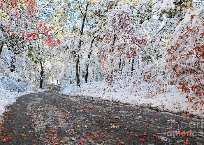 Snow Greeting Card featuring the photograph Painted Snow by Catherine Reusch Daley
