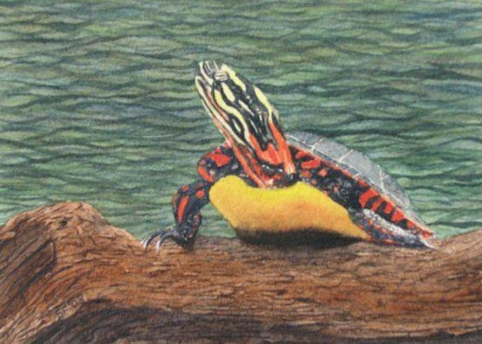 Turtle Greeting Card featuring the painting Painted Turtle Baby by Sharon Farber