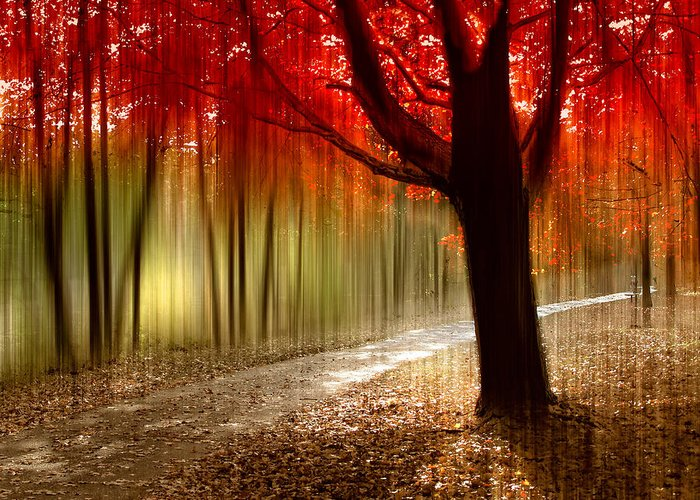 Autumn Greeting Card featuring the photograph Painted With Light by Jessica Jenney