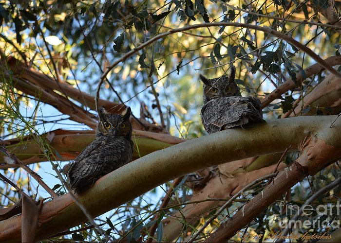 Great Horned Owls Greeting Card featuring the photograph Pair Of Great Horned Owls by Afroditi Katsikis