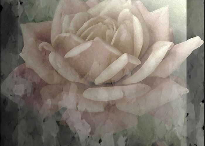 Nature Greeting Card featuring the photograph Pale Rose Photoart by Debbie Portwood