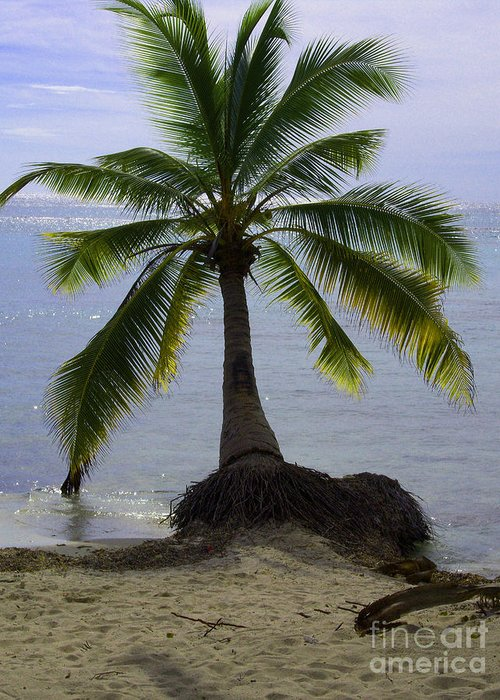 Palm Greeting Card featuring the photograph Palm At The Edge Of The Sea Number Two by Heather Kirk