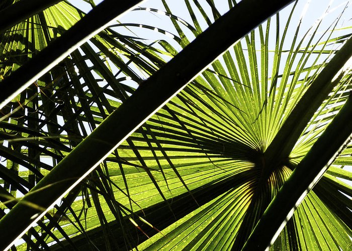 Plants Greeting Card featuring the photograph La Palm 3 by Gilbert Artiaga