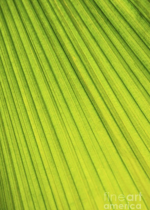 Palm Greeting Card featuring the photograph Palm Tree Leaf Abstract by Elena Elisseeva