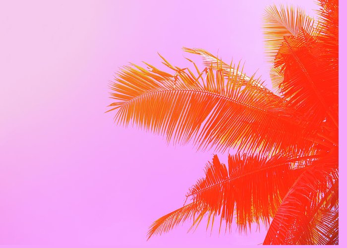 Orange Color Greeting Card featuring the photograph Palm Tree On Sky Background. Palm Leaf by Slavadubrovin