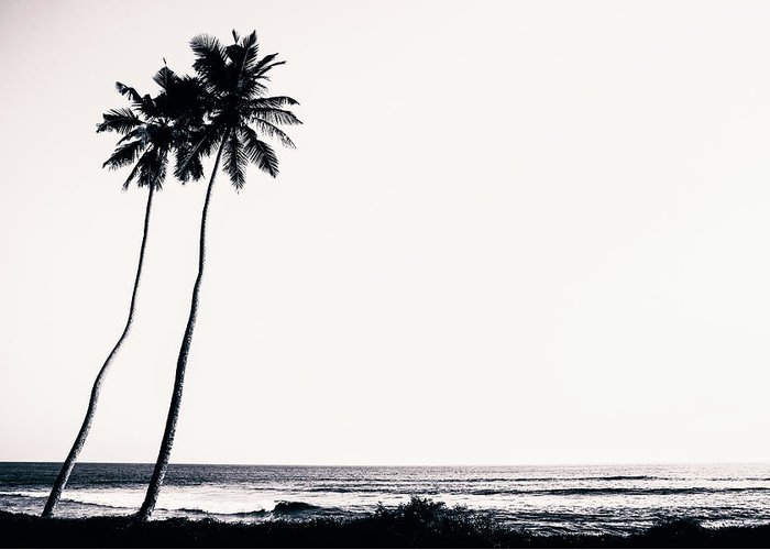 Empty Greeting Card featuring the photograph Palm Trees And Beach Silhouette by Chrispecoraro
