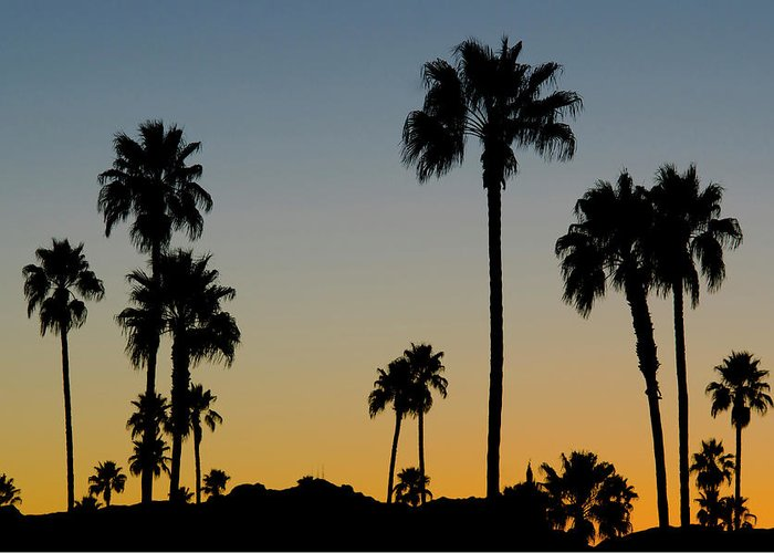 Scenics Greeting Card featuring the photograph Palm Trees At Sunset by Chapin31