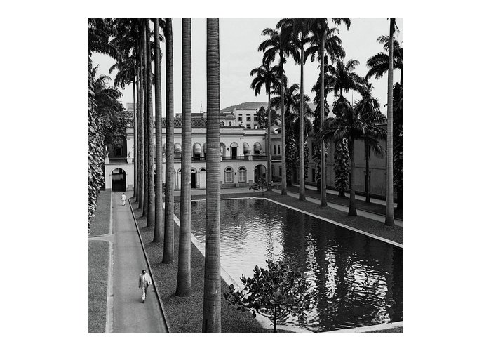 Exterior Greeting Card featuring the photograph Palm Trees Bordering A Pool by Luis Lemus