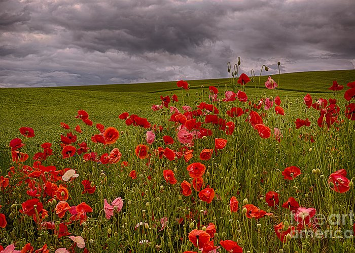 Poppies Greeting Card featuring the photograph Palouse Poppies by Priscilla Burgers