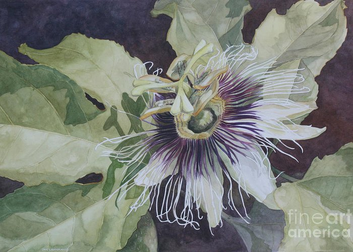 Passionfruit Paintings Greeting Cards