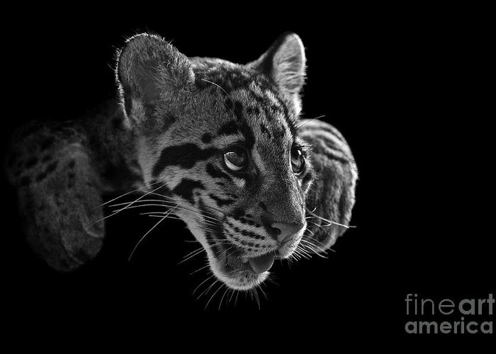 B&w Greeting Card featuring the photograph Panting Beauty by Ashley Vincent