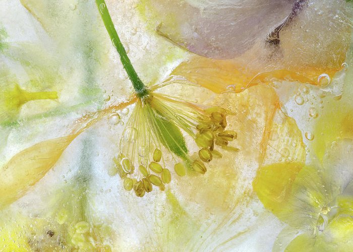 Papaver Greeting Card featuring the photograph Papaver Ice by Mandy Disher