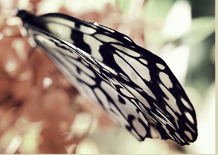 Paper Kite Greeting Card featuring the photograph Paper Kite Butterfly Wings by Marianna Mills