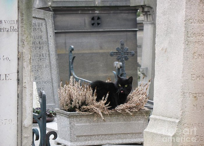 Paris Cemetery Cats Greeting Cards