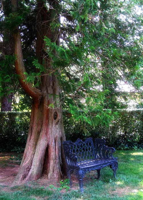 Park Bench Greeting Card featuring the photograph Park Bench by Kristen Carrasco